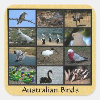 Australiensiska fåglar fyrkantigt klistermärke