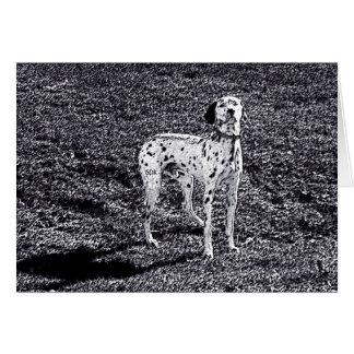 Avfyra den Dalmatian hunden för huset i svartvitt Hälsningskort