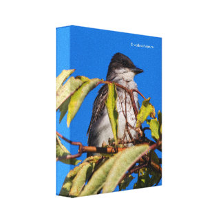 Avian royalty: Östlig Kingbird Canvastryck