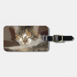 Avkopplad kattunge bagagebricka