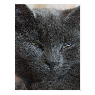 Avkopplad kattunge vykort