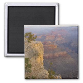 AZ Arizona, grand Canyonnationalpark, södra 7 Magnet