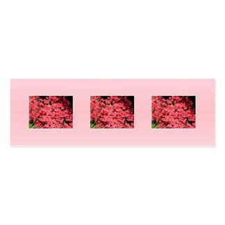 Azaleas. Nätt rosa Flowers. Set Av Smala Visitkort