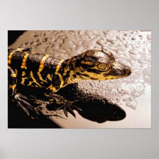 Babyalligator Poster