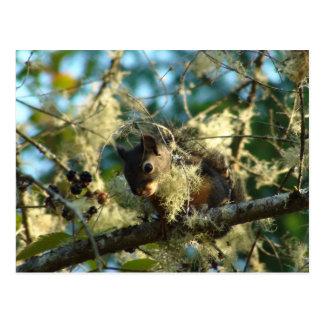 Babyekorre i björnbär vykort