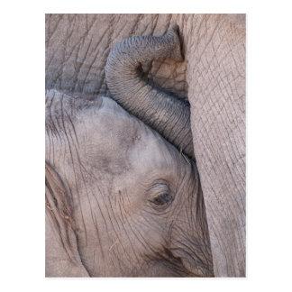 BabyelefantSnuggles Vykort