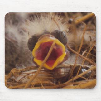 Babyfågel Musmatta