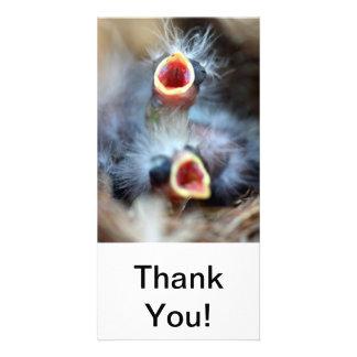 Babyfåglar Anpassingsbara Fotokort