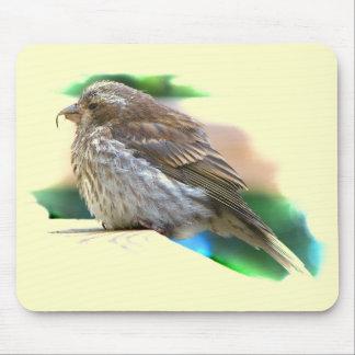 BabyFinchfågel Musmatta