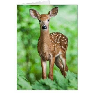 Babyhjort lismar Bambi i skogen Hälsningskort