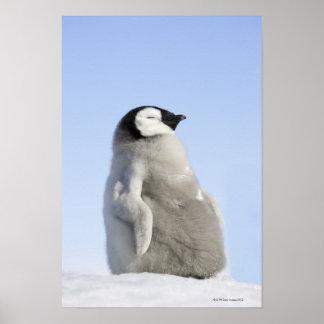 Babykejsarepingvin, snöbackeö poster