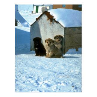 Babysledhundar, Grönland Vykort