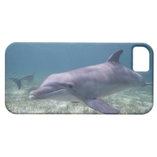 Bahamas storslagen Bahama ö, Freeport, fången 2 iPhone 5 Fodral