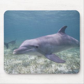 Bahamas storslagen Bahama ö, Freeport, fången 2 Musmatta