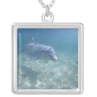 Bahamas storslagen Bahama ö, Freeport, fången 3 Silverpläterat Halsband