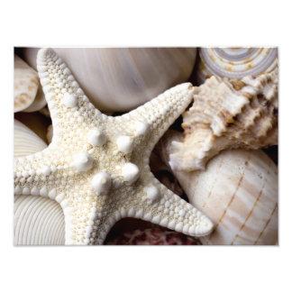 Bakgrund för havssnäckasjöstjärna - strandsnäckor fototryck