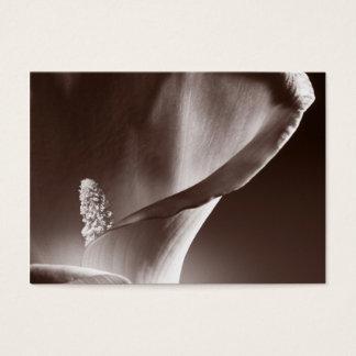 Bakgrund för svart för blomma för vitCallalilja