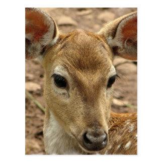 Bambi hjortvykort vykort
