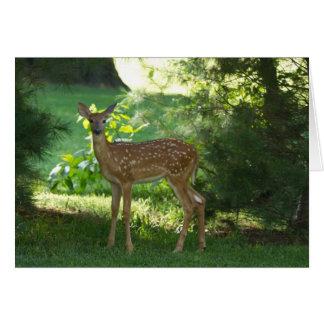 Bambi i Nauvoo Hälsnings Kort