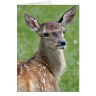 Bambi kort