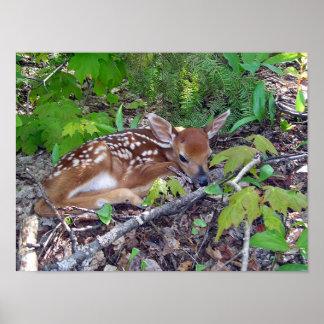 Bambi le bébé chevreuil poster
