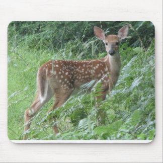 Bambi? Musmatta