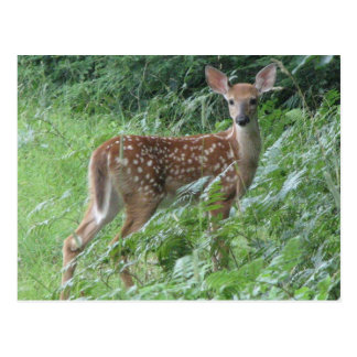 Bambi? Vykort