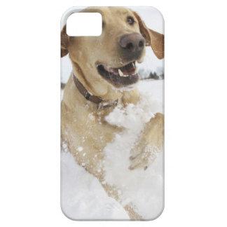Banhoppning för Labrador retriever till och med Barely There iPhone 5 Fodral