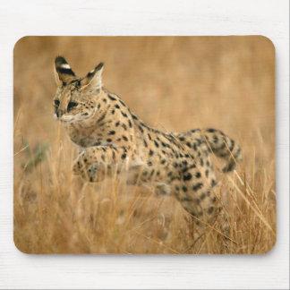 Banhoppning för Serval (Leptailurus Serval) Musmatta