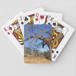 Baobab (Adansonia Digitata), Kruger medborgare Spelkort