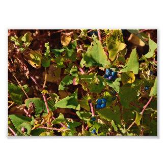 Bär för Gettysburg nationalparkblått Fototryck