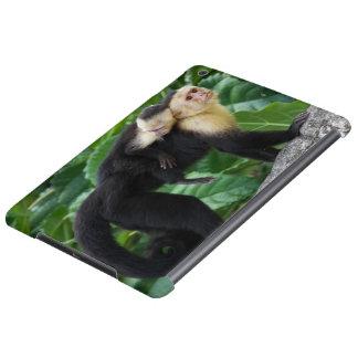 Bärande baby för vuxen Capuchinapa på dess baksida