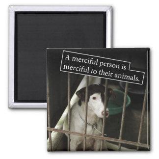 Barmhärtigt till djur kvadrera magneten