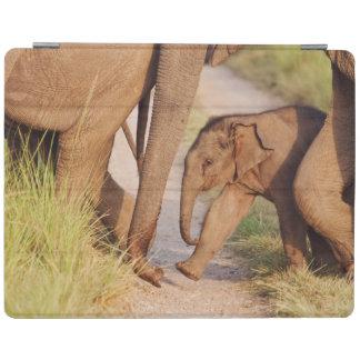 Barn ett av den indiska asiatiska elefanten iPad skydd
