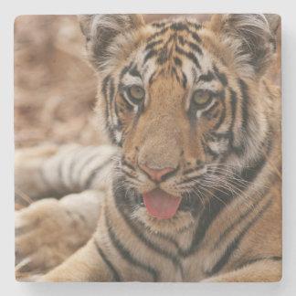 Barn ett av den kungliga Bengal tigern Underlägg Sten