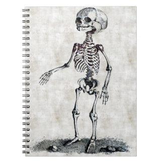 Barns skelett- anteckningsbok