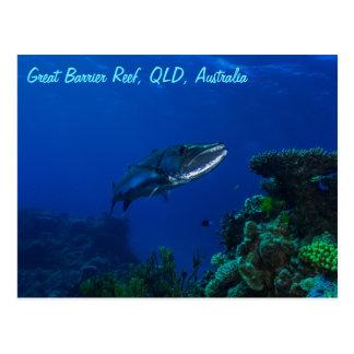 Barracuda på den underbara barriärrevvykortet vykort