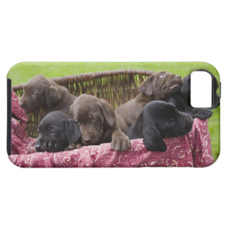 Basket av valpar för labrador retriever iPhone 5 Case-Mate fodraler