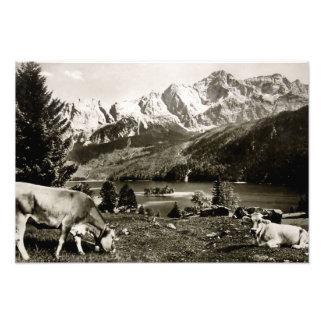 Bayerska berg för vintage med kor fototryck