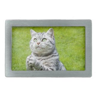 Be katten på grönt gräs