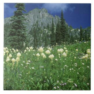 Beargrass på Eunice sjön, Mount Rainier NP, WA, Kakelplatta