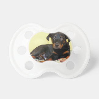 beauceron puppy.png napp