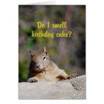 Bedjande ekorregrattis på födelsedagen kort