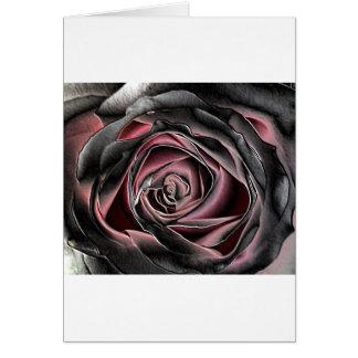 Bedöva svart och rosa ros hälsningskort
