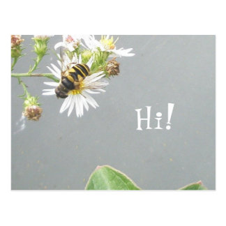 Beefly som är hög! Vykort