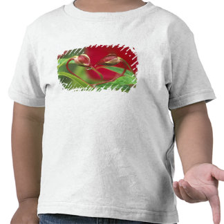 Begoniaen som knoppar i hjärta formar med, tappar. t-shirt