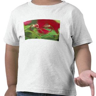 Begoniaen som knoppar i hjärta formar med, tappar. tröjor
