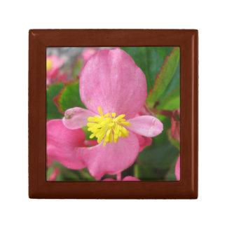 Begoniarosablomma Smyckeskrin