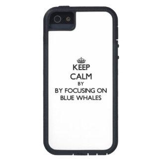 Behållalugn, genom att fokusera på blåttval iPhone 5 skydd