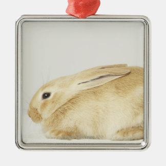 Beige kaninkanin på vitbakgrund 4 julgransprydnad metall